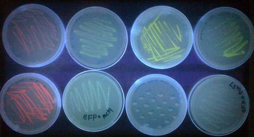 Microbiology go majors