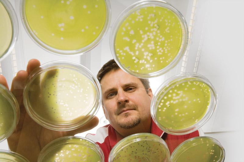 A researcher examining Petri dishes